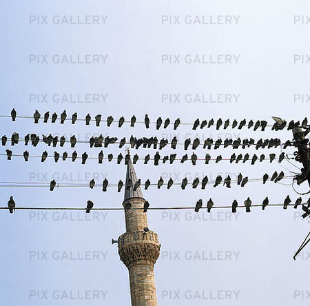 Fåglar på kraftledning, Turkiet