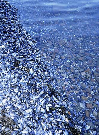Snäckskal på havsstrand