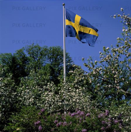 Bild På Svenska Flaggan Vtxueu Rights Managed Foto Bildbyrå Pix