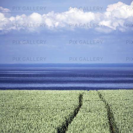 Spår i grödor