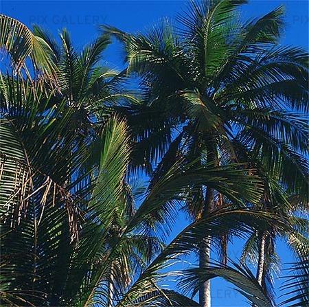 Palmer, Dominikanska Republiken