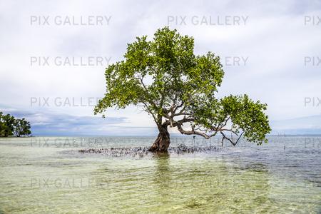 Träd som växer i havet, Filippinerna
