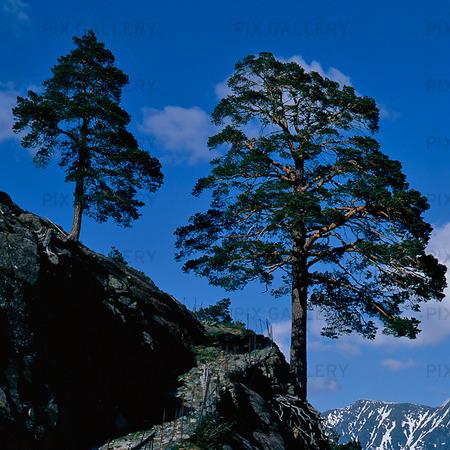 Tallar, Norge