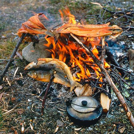 Tillaga sik vid öppen eld, Lappland