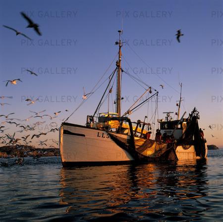 Fiskebåt, Bohuslän
