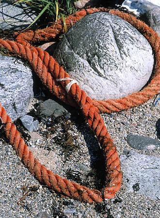 Rep på strand