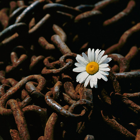 Blomma i rostig kätting