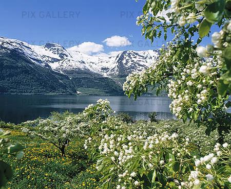 Natural Landscapes, Norway