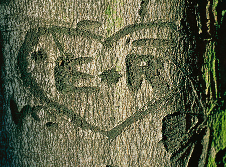 Ristning på trädstam