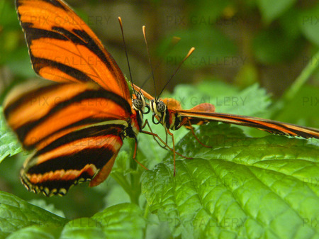 Fjäril ConservatoryNiagara (Ontario) Canada