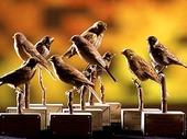 Uppstoppade småfåglar