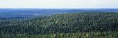 Landskap med skog