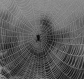 Spindelnät med spindel