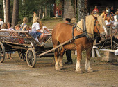 Hästdroska med barn