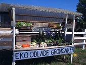 Ekologiskt odlade grönsaker
