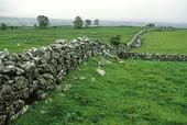 Gärdesgårdar i Irländskt landskap