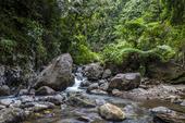 Fors i regnskog, Filippinerna