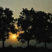 Gryning vid träd
