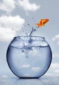 guldfisk hoppar upp ur vattnet