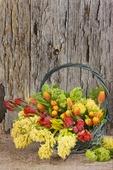 Blommor i korg
