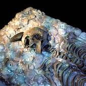 Skelett av stenåldersman