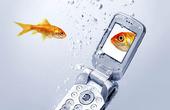 Guldfisk vid mobiltelefon
