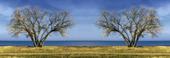 Två träd, manupulerad bild