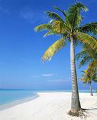 Palm på strand