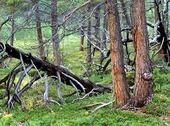 Fjällnatur i Abisko, Lappland