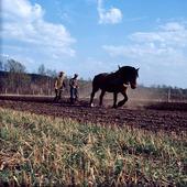Plöjning med häst