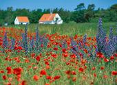 Vallmofält på Gotland