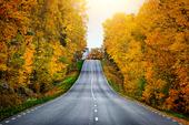 Rak landsväg genom höstskog