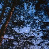 Träd i månljus