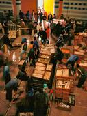 Fiskauktion i Agadir, Marocko