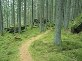 Stig i skog