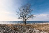Träd vid kusten