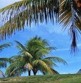 Palmer, Mauritius