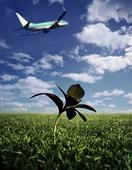 Planta vid flygplats