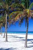 Palmstrand, Cuba