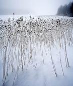 Vass i snö