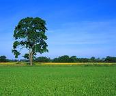 Landskap - sommar