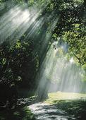 Regnväder i solljus