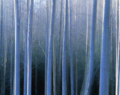 Trädstammar