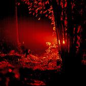 Belyst skog