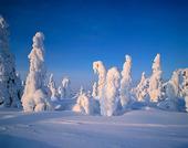 Vinterträd