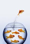 Guldfisk hoppar ur vattnet