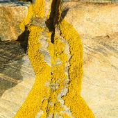 Lavar på klippa