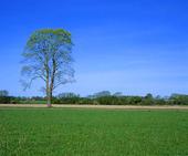 Landskap - vår