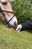 Häst som luktar på hand