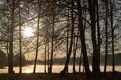 Träd i soluppgång